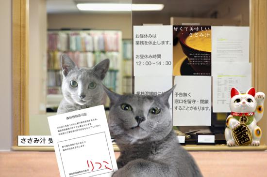猫役所45