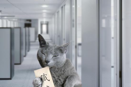 猫役所47