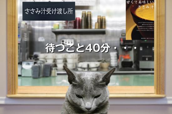 猫役所55