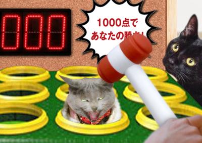 猫たたき25