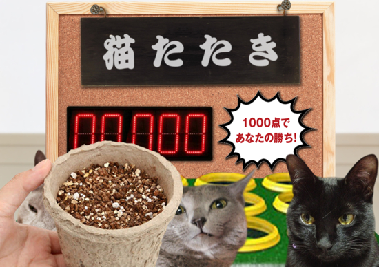 猫たたき33