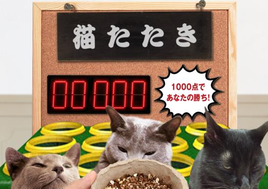 猫たたき34