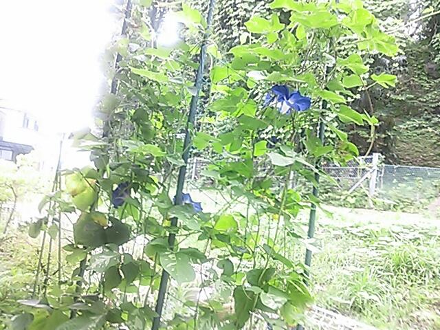 fc2_2013-08-05_00-34-44-860.jpg