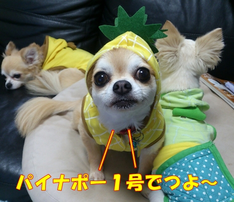 blog1375086902029.jpg