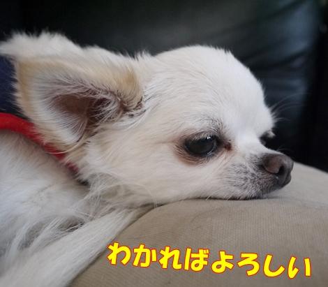 gf5P1070634.jpg