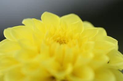 20099g18kiiro5.jpg