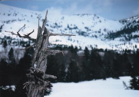 ブログ冬の蔦沼4
