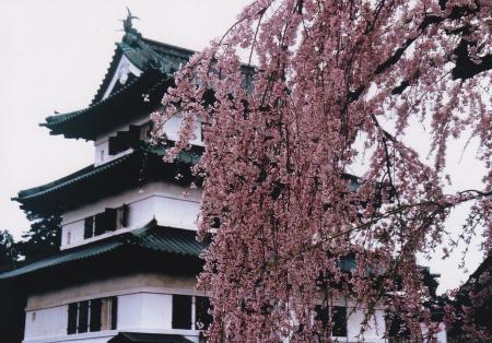 ブログ弘前城さくら