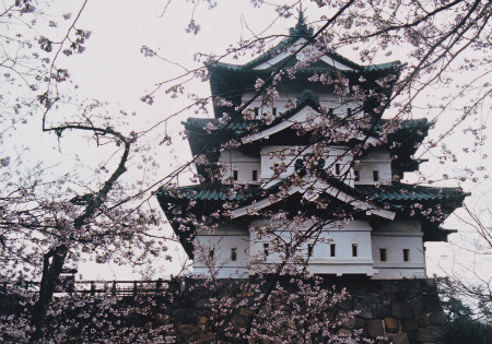 ブログ弘前城さくら4