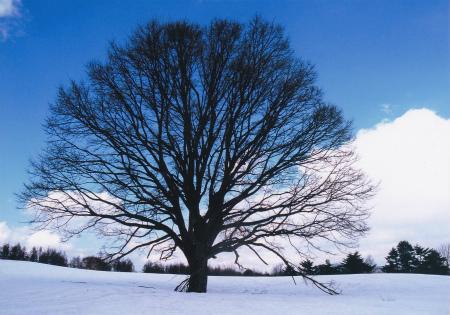 ブログ萱野茶屋の気になる木