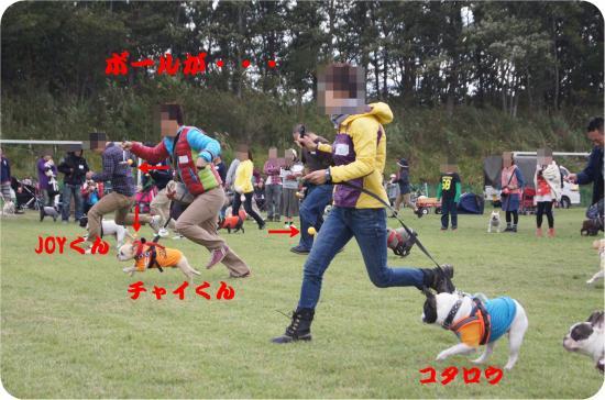 DSC02481_convert_20131015221502.jpg