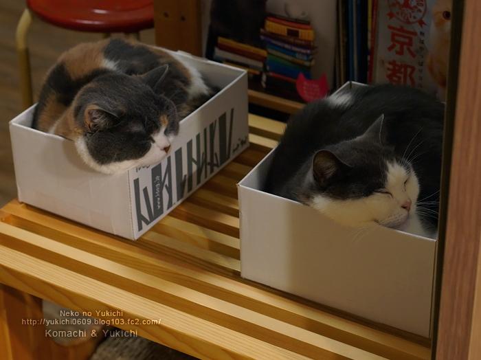 箱ゆきち箱こまち