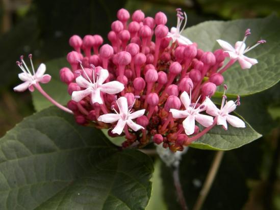 その他の花2