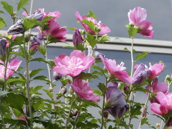 その他の花4