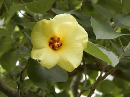 その他の花7