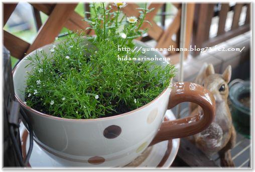 1-1植木鉢130602