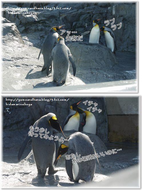 3ペンギンiHgPtYbOMJrPkrJ1371388645_1371388938