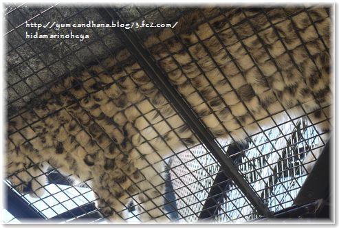 3下から見た豹1306131