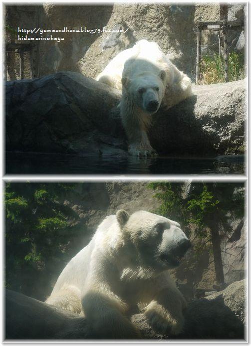 3白熊130613