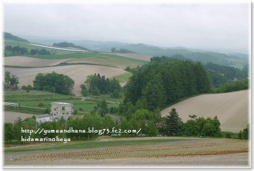 1-色彩の丘④130614