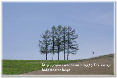 1-嵐の木1306141