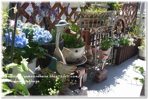 1-ベランダのお花130701