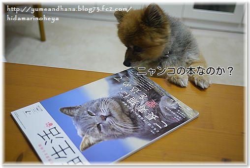 001-ニャンコの本なのNjbSXmPe8At9aL41374583438_1374583488