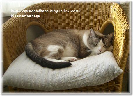 01-ミルクの椅子130812