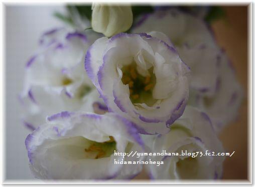 01-お花130829