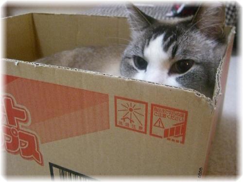 01-ミルクの箱130907