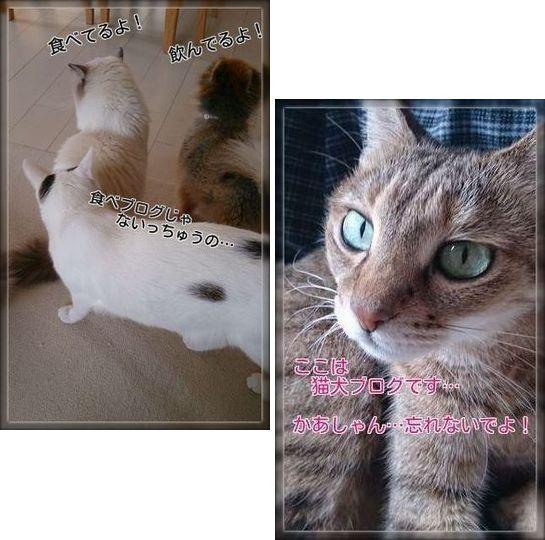 001-猫犬ブログm6e2c33nQtYxn0S1384172649_1384172659
