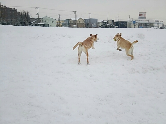 fc2_2014-01-28_18-56-04-642.jpg