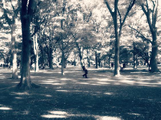 yurudeji_代々木公園b