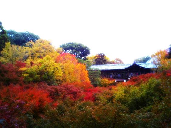 yurudeji_東福寺