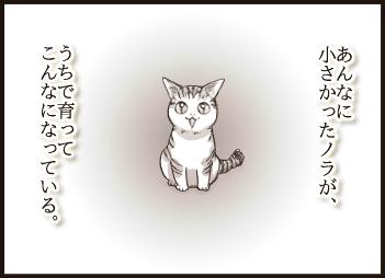noraya4-09.jpg