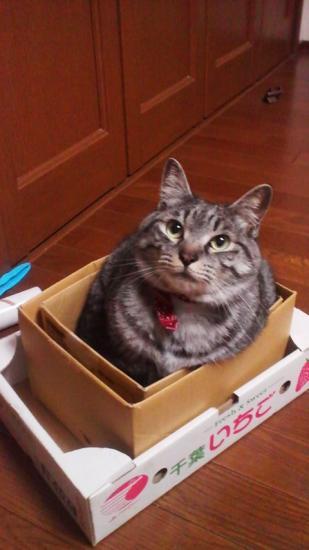 銀ちゃんボックス
