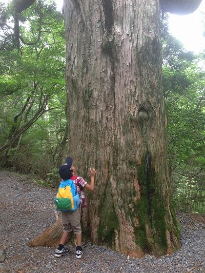 霧島池巡り-08巨木杉1