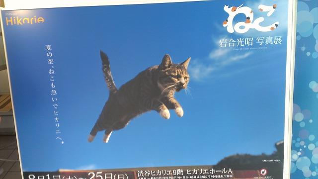 渋谷 ヒカリエ 猫 展