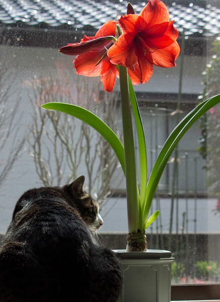 花と猫ハチ