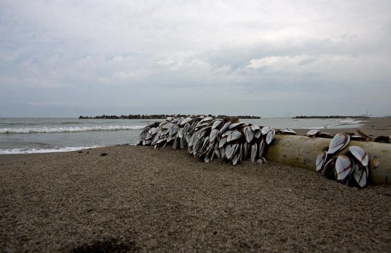 流木と貝1