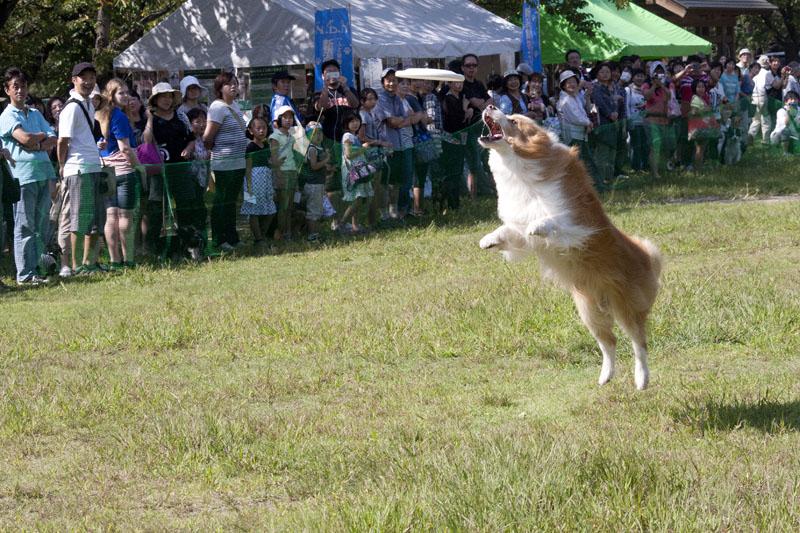 フルスビー犬
