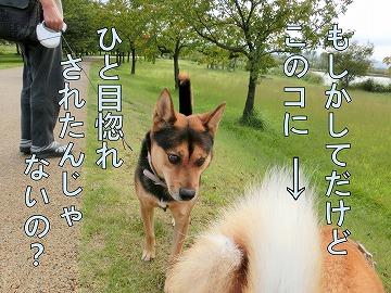 s-kuro141031-CIMG3301