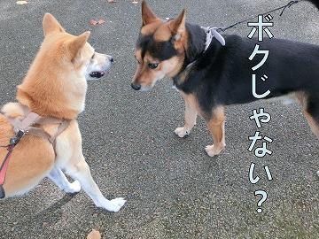 s-kuro141031-CIMG3311