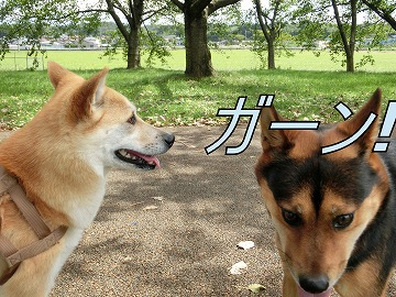 s-kuro141031-CIMG3322