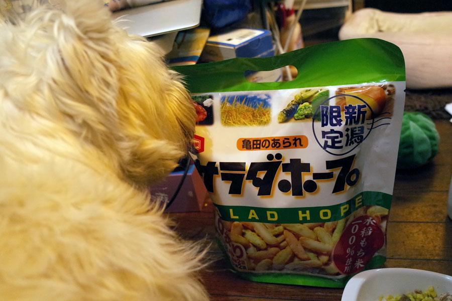 denkyushokunoimonechan2.jpg