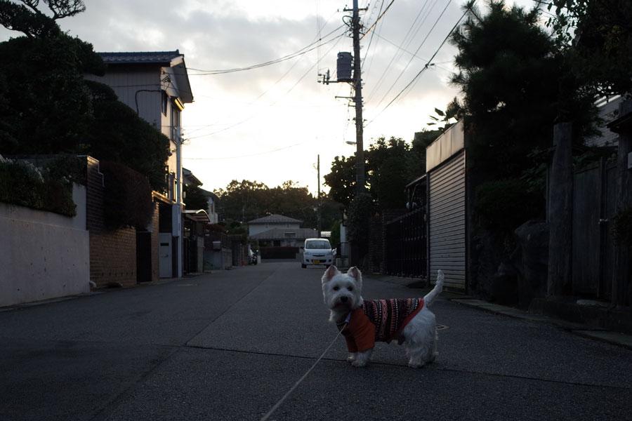 higasiyorinisinogaakarui1.jpg