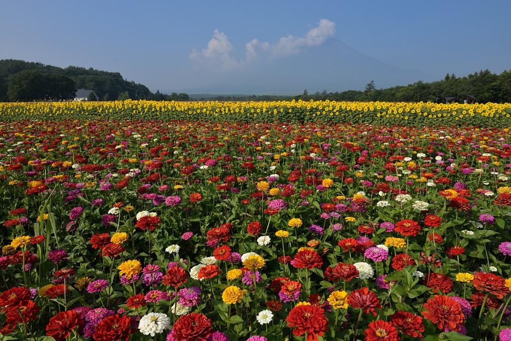 盛夏の花畑~彩りの競演