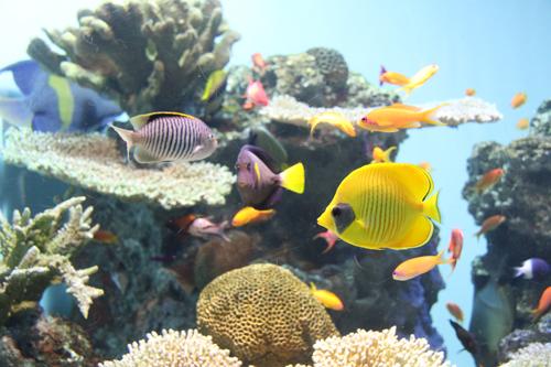 カラフルな魚たち