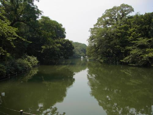 井の頭池東端より池をのぞむ
