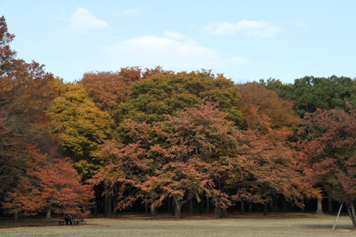 小金井公園の紅葉2